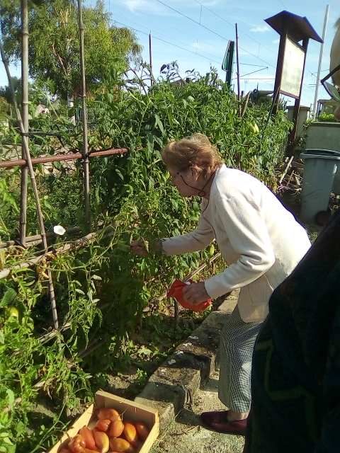 Promenade Sous le Soleil et Cueillette de légumes